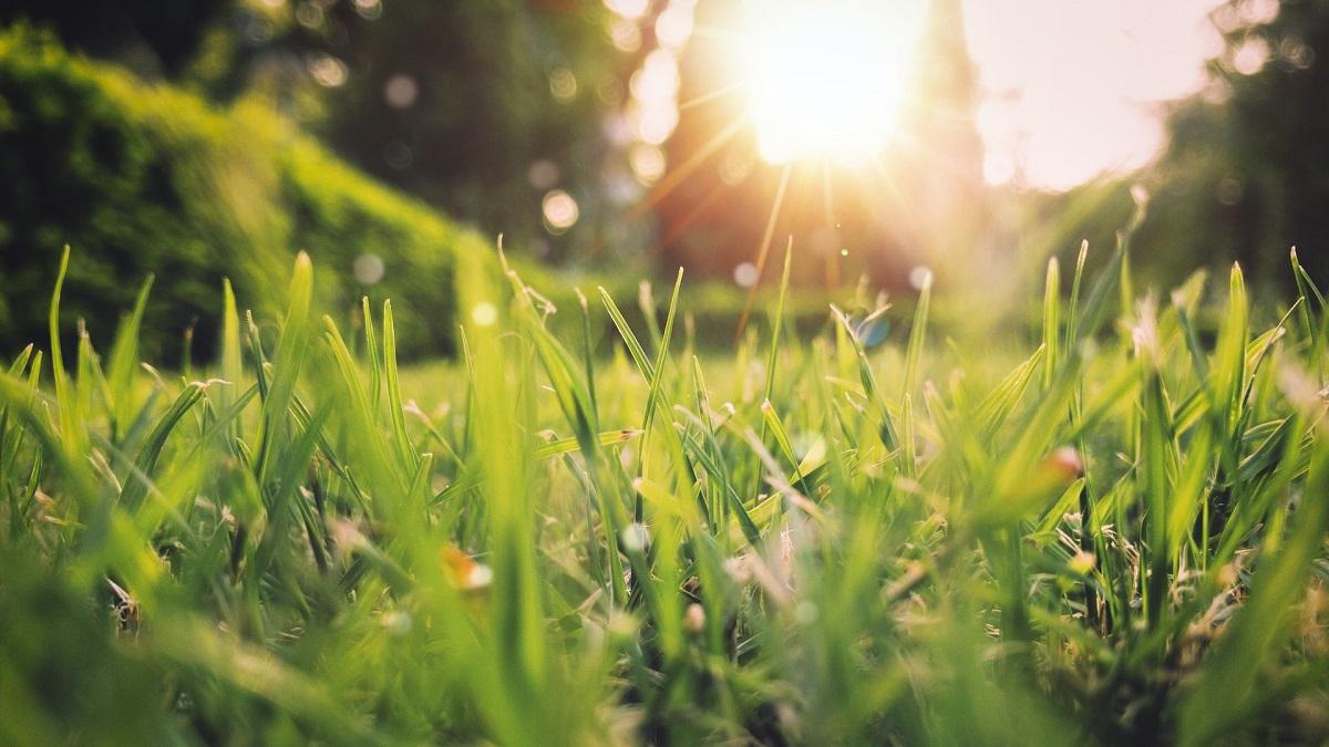 Maak je tuin lenteklaar in 7 stappen
